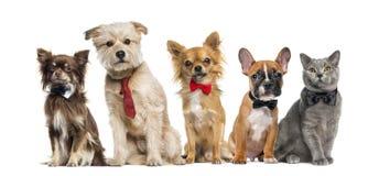Grupo de perros y de gatos Fotografía de archivo libre de regalías