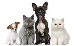 Grupo de perros y de gatos delante del blanco Imagen de archivo libre de regalías
