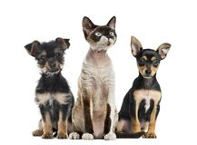 Grupo de perros y de sentada del gato, aislado imágenes de archivo libres de regalías