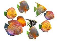 Grupo de pescados Fotografía de archivo libre de regalías