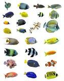 Grupo de pescados Imagen de archivo