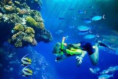 Grupo de pescados coralinos en agua azul. Fotografía de archivo