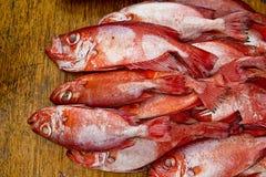Grupo de pescados del pargo rojo en mercado Foto de archivo libre de regalías
