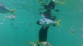 Grupo de pescados de la trucha salmonada subacuáticos almacen de video