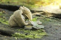 Grupo de pilha da moeda no mini saco e na planta que incandescem no coi da economia Imagens de Stock Royalty Free