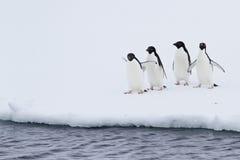Grupo de pingüinos de Adelie en el hielo cerca del agua Imagen de archivo libre de regalías