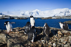 Grupo de pinguins imagem de stock royalty free