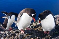 Grupo de pinguins imagem de stock