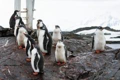 Grupo de pinguins imagem de stock royalty free