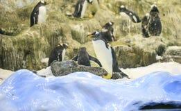 Grupo de pinguins em um jardim zoológico imagens de stock