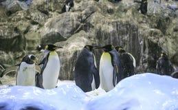 Grupo de pinguins em um jardim zoológico foto de stock royalty free
