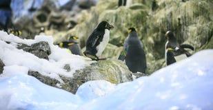 Grupo de pinguins em um jardim zoológico foto de stock