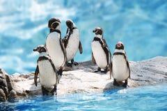 Grupo de pinguins engraçados foto de stock royalty free