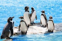 Grupo de pinguins engraçados fotos de stock royalty free