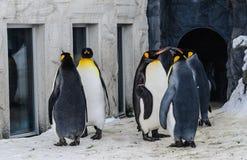 Grupo de pinguins no jardim zoológico de Japão imagens de stock royalty free