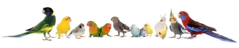 grupo de pájaros Foto de archivo libre de regalías