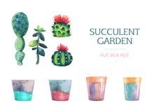 Grupo de planta carnuda da aquarela e de um potenciômetro de flor ilustração royalty free