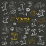 Grupo de plantas e de cogumelos da floresta no fundo preto Imagem de Stock