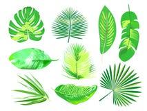 Grupo de plantas exóticas tropicais Folhas de palmeira Vetor foto de stock