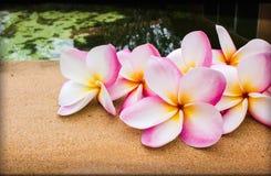 Grupo de plumeria cor-de-rosa doce bonito da flor decorado na telha da rocha ao lado da associação Imagens de Stock Royalty Free