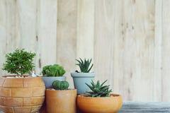 Grupo de pocas plantas de tiesto del cactus en el fondo de madera de la pared, concepto suculento, espacio de la copia fotografía de archivo