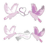 Grupo de pombas de um casamento dos pares com uma fita no bico Imagem de Stock Royalty Free