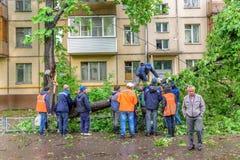 Grupo de porteros que asierran el árbol de castaña gigantesco caido como resultado de los vientos de huracán severos en el área r Fotos de archivo