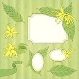 Grupo da flor do Ylang-ylang ilustração stock