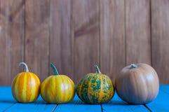 Grupo de quatro abóboras diferentes Abóbora - um de Imagens de Stock Royalty Free