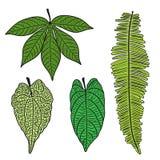 grupo de quatro folhas tropicais verdes ilustração royalty free