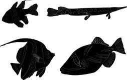 Grupo de quatro sketchs dos peixes isolados no branco Foto de Stock