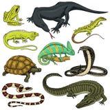 Grupo de répteis e de anfíbios Crocodilo, jacaré e serpentes, lagarto de monitor, camaleão e tartaruga selvagens Animal de estima ilustração stock
