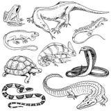 Grupo de répteis e de anfíbios Crocodilo, jacaré e serpentes, lagarto de monitor, camaleão e tartaruga selvagens Animal de estima ilustração do vetor