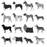 Grupo de raças do cão Fotos de Stock Royalty Free