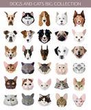 Grupo de raças populares lisas de ícones dos gatos e dos cães imagens de stock