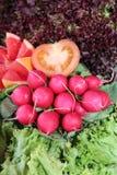 Grupo de radishes vermelhos foto de stock