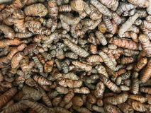 Grupo de raizes de cúrcuma Imagem da foto fotos de stock