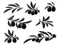 Grupo de ramo de oliveira Imagem de Stock