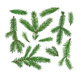 Grupo de ramos de árvore do abeto isolados no fundo branco Natal, símbolo do ano novo Foto de Stock Royalty Free