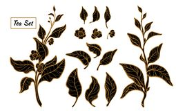 Grupo de ramos do arbusto do chá Silhueta preta do vetor isolada no fundo branco Fotos de Stock Royalty Free