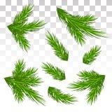 Grupo de ramos verdes do pinho Isolado Natal decor O Chri Imagem de Stock