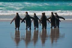 Grupo de rei pinguins na praia Imagens de Stock Royalty Free