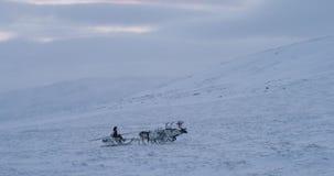 Grupo de renos con un hombre siberiano con un trineo tener un paseo a través del campo de nieve en el medio de tundra ártica almacen de metraje de vídeo
