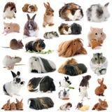 Grupo de roedores Imágenes de archivo libres de regalías