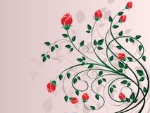 Grupo de Rosa Imagem de Stock Royalty Free