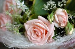 Grupo de rosas cor-de-rosa das flores fotografia de stock