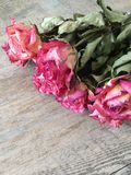 Grupo de rosas cor-de-rosa secas Fotografia de Stock Royalty Free