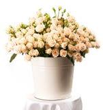 Grupo de rosas cremosas em uma cubeta sobre o branco Imagens de Stock