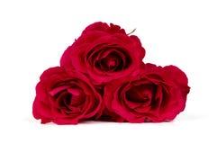 Grupo de rosas vermelhas fotos de stock royalty free