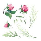 Grupo de rosas vermelhas do vetor e de folhas do verde Imagem de Stock